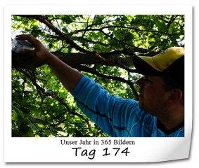 tag-174