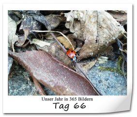 tag-66