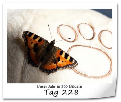 tag-228