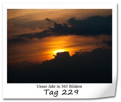 tag-229