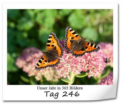 tag-246
