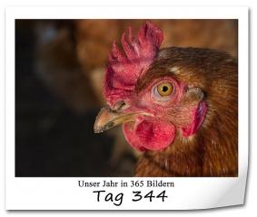 tag-344