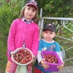 Erdbeeren und Hecke